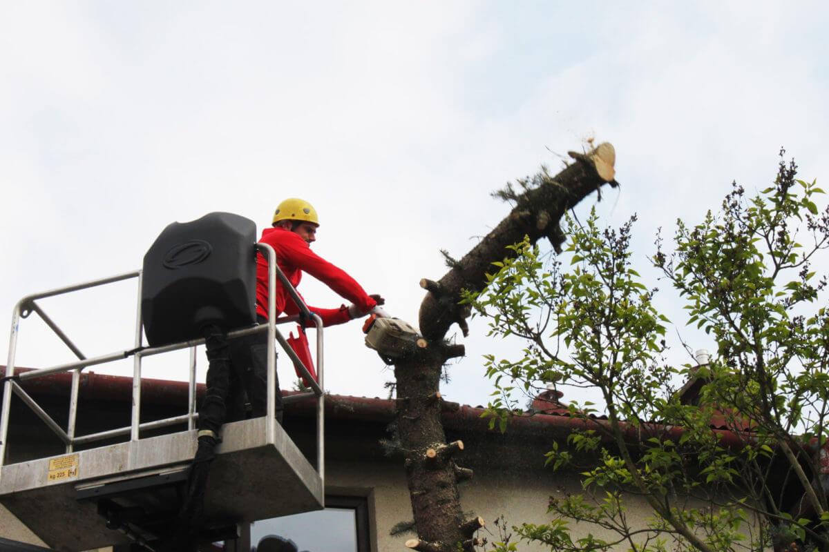 <strong>Wycinanie drzew</strong>